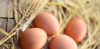 Proteine Eier